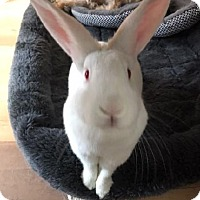 Adopt A Pet :: Aurora - Libertyville, IL
