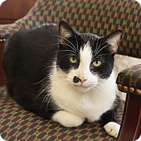 Adopt A Pet :: Fluffy - Anderson, IN