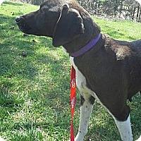 Adopt A Pet :: Sheena - Leesburg, VA