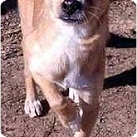 Adopt A Pet :: Lenny - Clarksville, TN