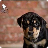 Adopt A Pet :: Berkley - Rochester, NY