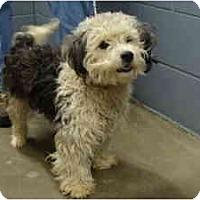 Adopt A Pet :: JACK - Georgetown, KY