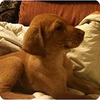 Adopt A Pet :: Abigal-updated pictures - Glastonbury, CT