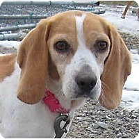 Adopt A Pet :: Stella Bella - Indianapolis, IN