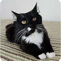Adopt A Pet :: Julie - Reston, VA