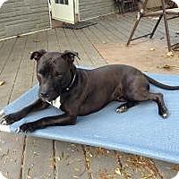 Adopt A Pet :: Princess - Courtesy Post - Rochester/Buffalo, NY