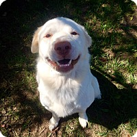 Adopt A Pet :: Rover - Fort Valley, GA