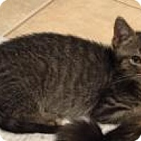 Adopt A Pet :: Crush - East Hanover, NJ