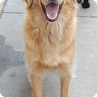 Adopt A Pet :: Beau - Knoxville, TN