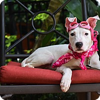 Adopt A Pet :: Bunny - Baton Rouge, LA