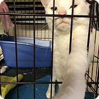 Adopt A Pet :: Perseus - Byron Center, MI