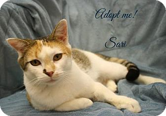 Domestic Shorthair Cat for adoption in West Des Moines, Iowa - Sari
