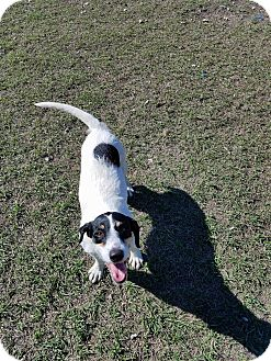 Terrier (Unknown Type, Medium) Mix Dog for adoption in Hammond, Louisiana - Alice