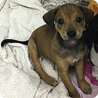 Adopt A Pet :: Jake - Washington, PA
