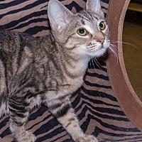 Adopt A Pet :: Freddie - Elmwood Park, NJ
