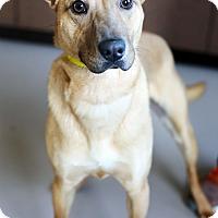 Adopt A Pet :: Banjo *Petsmart GB* - Appleton, WI