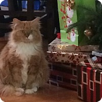 Adopt A Pet :: Sassy - Morganton, NC