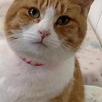 Adopt A Pet :: Lois - Fremont, OH