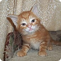 Adopt A Pet :: K2 - Acme, PA