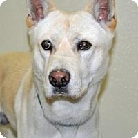 Adopt A Pet :: Jimmy - Port Washington, NY