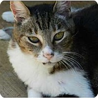 Adopt A Pet :: Storm - Makawao, HI