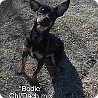 Adopt A Pet :: Bodie - Gadsden, AL