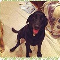 Adopt A Pet :: Neptune - Blue Ridge, GA