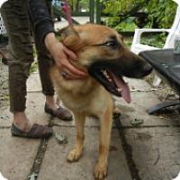 Adopt A Pet :: Gottfried - Antioch, IL