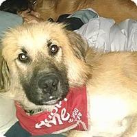 Adopt A Pet :: Floyd - Largo, FL