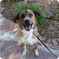 Adopt A Pet :: Aurora - Greeley, CO