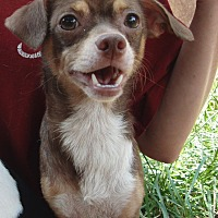 Adopt A Pet :: Toby - Marion, AL