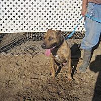 Adopt A Pet :: Butch - Lancaster, CA