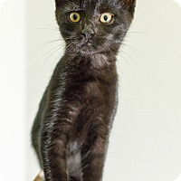 Adopt A Pet :: Wickham - St. Louis, MO