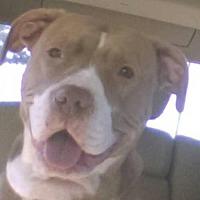Adopt A Pet :: PRINCESS - Amherst, OH