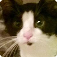 Adopt A Pet :: LA-Stella(carefully read listing 4 applying info) - Devon, PA