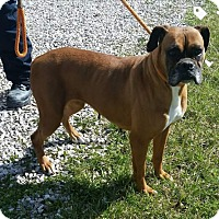 Adopt A Pet :: Jewels - mooresville, IN
