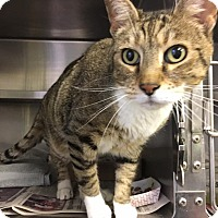 Adopt A Pet :: Freddie-A Sweet Fellow - Manchester, NH