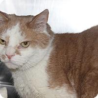 Adopt A Pet :: CRUSHER - Clayton, NJ
