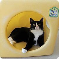 Adopt A Pet :: Fontina - Umatilla, FL