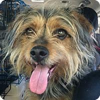 Adopt A Pet :: Sammi - Oak Ridge, NJ