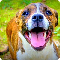 Adopt A Pet :: George - Glastonbury, CT