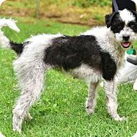 Adopt A Pet :: LUNA - Marina Del Ray, CA