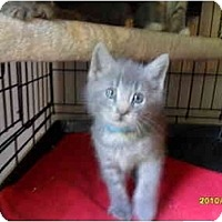 Adopt A Pet :: Grayson - Frenchtown, NJ