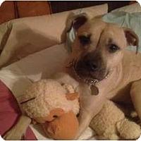 Adopt A Pet :: Siri - Cleveland, OH