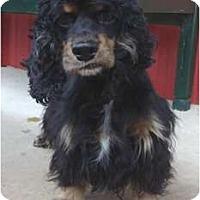 Adopt A Pet :: Tizzy Lou - Sugarland, TX