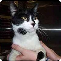 Adopt A Pet :: Chester - Scottsdale, AZ