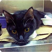 Adopt A Pet :: Babi - Secaucus, NJ
