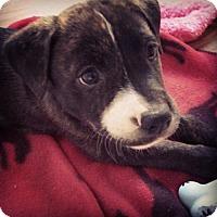 Adopt A Pet :: Porky - Huntington Beach, CA