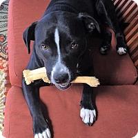 Adopt A Pet :: Scout - Orange Lake, FL
