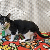 Adopt A Pet :: Betty - The Colony, TX